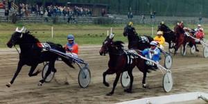 paarden sport